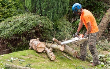 additional services offered by Dundee City tree surgeons