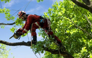 find trusted rated Dundee City tree surgeons