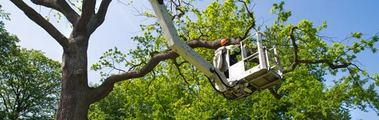 Dundee City tree surgery services