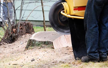rated Dundee City tree stump removal companies