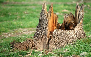 tree stump removal Dundee City