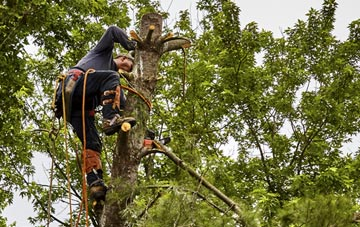 tree surgeon Dundee City