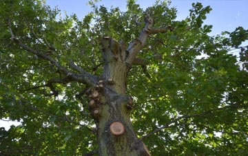 what is Dundee City tree surgery?