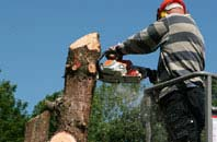 Dundee City felling services