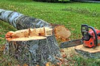 free Dundee City tree felling quotes