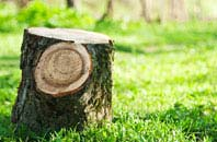 Dundee City tree stump removal services