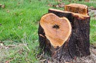free Dundee City tree stump removal quotes