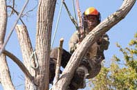 Dundee City tree surgeon services