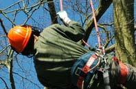 free Dundee City tree surgeon quotes